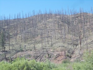 result-of-forest-fire-near-deckers