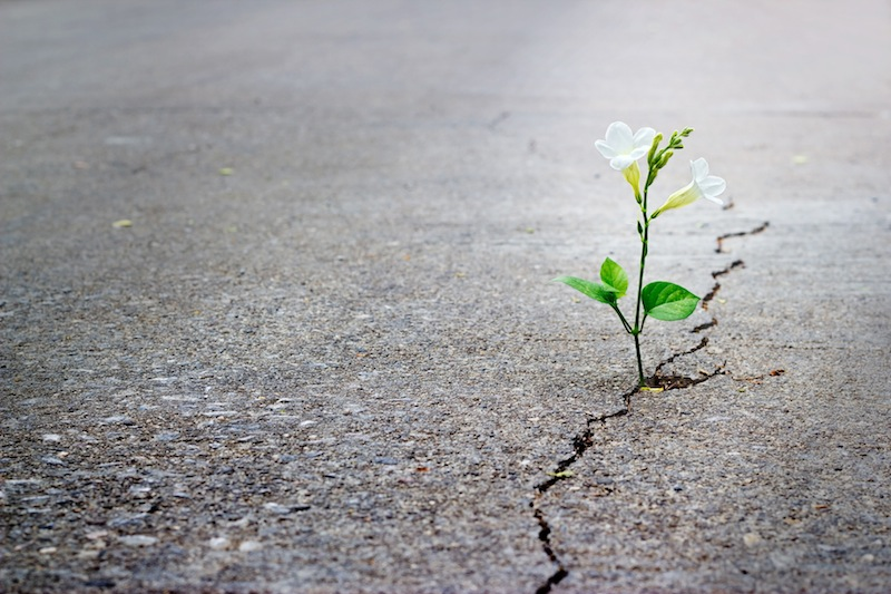 white flower growing on crack street, soft focus.
